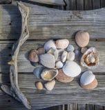 Raccolta dei seashels Immagini Stock