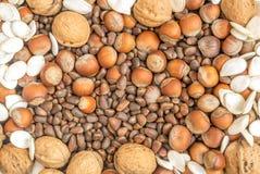 Raccolta dei semi delle noci, delle nocciole, dei pinoli e di zucca Fotografia Stock