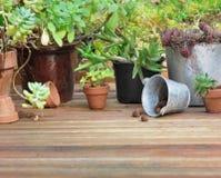 Raccolta dei succulenti Fotografia Stock Libera da Diritti