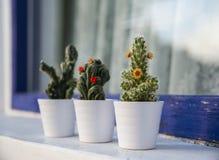 Raccolta dei succulenti e del cactus Immagine Stock Libera da Diritti