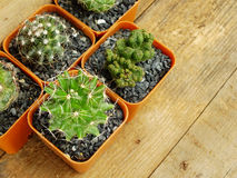 Raccolta dei succulenti e del cactus in piccoli vasi da fiori Immagini Stock Libere da Diritti