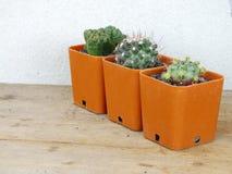 Raccolta dei succulenti e del cactus in piccoli vasi da fiori Fotografie Stock