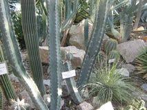 Raccolta dei succulenti nel conservatorio del giardino botanico Fotografie Stock Libere da Diritti