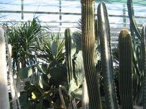 Raccolta dei succulenti nel conservatorio del giardino botanico Immagini Stock Libere da Diritti