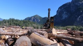 Raccolta dei tronchi di legno commoventi del veicolo industriale di legno stock footage