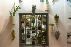 Raccolta del cactus Fotografia Stock