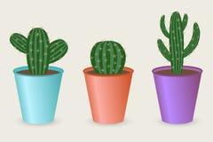Raccolta del cactus Immagine Stock Libera da Diritti