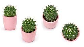 Raccolta del cactus isolata su fondo bianco Aloe ed altri succulenti in vaso ceramico variopinto Fotografia Stock Libera da Diritti