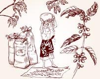 Raccolta del caffè Illustrazione d'annata del processo di fabbricazione del caffè Fotografia Stock