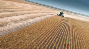 Raccolta del campo del fagiolo della soia Fotografie Stock