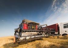 Raccolta del campo del fagiolo della soia Fotografia Stock Libera da Diritti