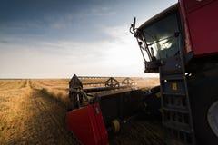 Raccolta del campo del fagiolo della soia Immagine Stock Libera da Diritti
