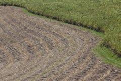 Raccolta del campo del raccolto della canna da zucchero Fotografie Stock Libere da Diritti