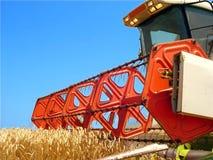 Raccolta del campo di cereale Fotografie Stock Libere da Diritti