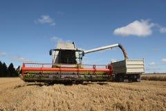 raccolta del campo di cereale Fotografia Stock