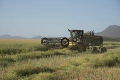 Raccolta del Canola su un'azienda agricola sudafricana Immagini Stock Libere da Diritti