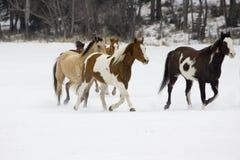 Raccolta del cavallo Immagini Stock
