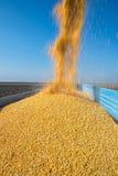 Raccolta del cereale Immagini Stock