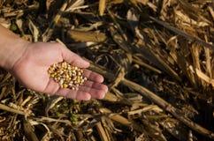 Raccolta del cereale fotografia stock