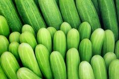 Raccolta del cetriolo all'aperto sul mercato Fotografia Stock