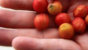 Raccolta del clausena della frutta archivi video