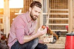 raccolta del coltivatore delle uova Fotografia Stock