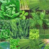 Raccolta del concetto verde di Greenary della raccolta delle foto Fotografie Stock