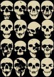 Raccolta del cranio Fotografia Stock