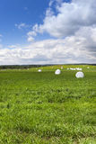 Raccolta del fieno dell'erba Fotografia Stock Libera da Diritti