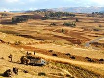 Raccolta del fieno nelle Ande Fotografie Stock Libere da Diritti
