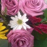 Raccolta del fiore Immagini Stock Libere da Diritti