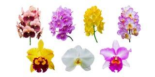 Raccolta del fiore dell'orchidea Fotografie Stock Libere da Diritti