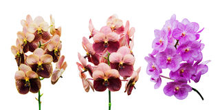 Raccolta del fiore dell'orchidea Immagini Stock