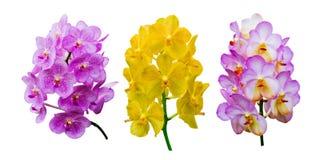 Raccolta del fiore dell'orchidea Fotografie Stock