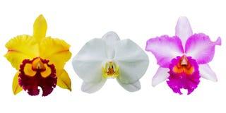 Raccolta del fiore dell'orchidea Immagini Stock Libere da Diritti