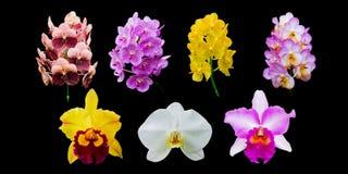 Raccolta del fiore dell'orchidea Fotografia Stock