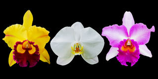 Raccolta del fiore dell'orchidea Fotografia Stock Libera da Diritti