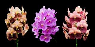 Raccolta del fiore dell'orchidea Immagine Stock Libera da Diritti