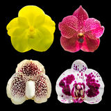 Raccolta del fiore dell'orchidea isolata su fondo nero Immagine Stock