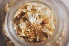 Raccolta del fiore per il tè di camomilla Erbe della Russia Immagini Stock Libere da Diritti