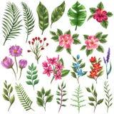 Raccolta del flowera e delle foglie Fotografia Stock