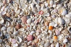 Raccolta del fondo delle conchiglie della spiaggia Immagini Stock Libere da Diritti