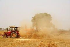 Raccolta del frumento e separazione dorate India della paglia Fotografie Stock Libere da Diritti