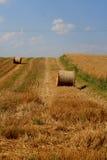 Raccolta del frumento in Polonia Fotografia Stock Libera da Diritti