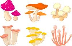 Raccolta del fungo Immagine Stock