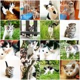 Raccolta del gattino divertente differente Immagine Stock