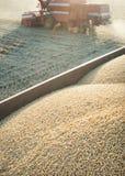 Raccolta del giacimento della soia. Fotografie Stock