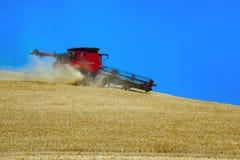 Raccolta del grano Fotografie Stock Libere da Diritti