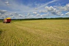 Raccolta del grano al giorno soleggiato Fotografia Stock