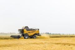 Raccolta del grano con una mietitrebbiatrice Fotografia Stock